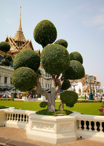 Bangkok tree por doug88888