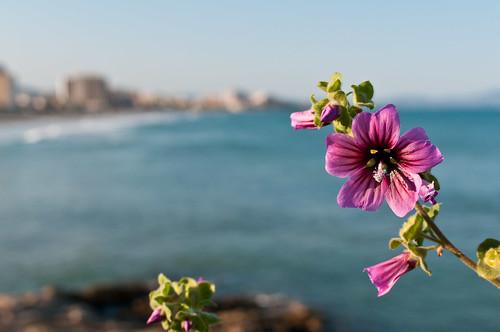 Flor de mar