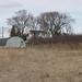 asparagus hoophouse orchard March11