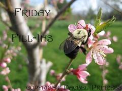 Friday Fill Ins