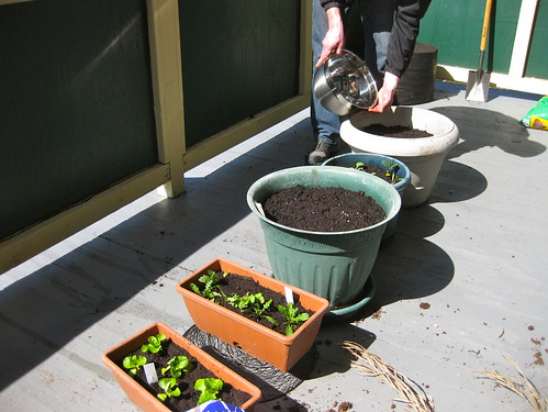 Container gardening: phase one!