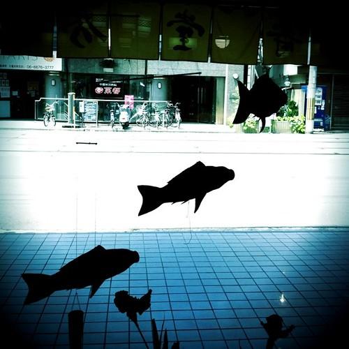 あれっ、鯉が泳いでる…。 #carp