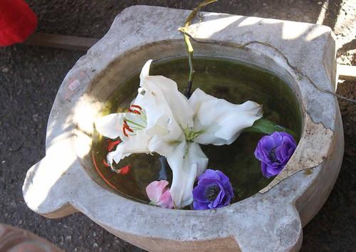 20110410_1378_stone-basin-flowers