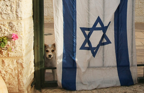 Puppy and Flag - Israel Independence Day 2011