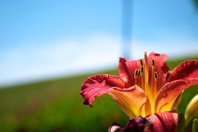 Bloomin' Flower