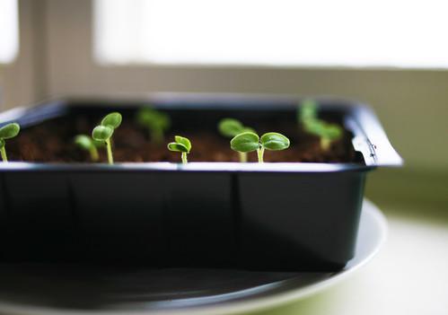 grönsaker I