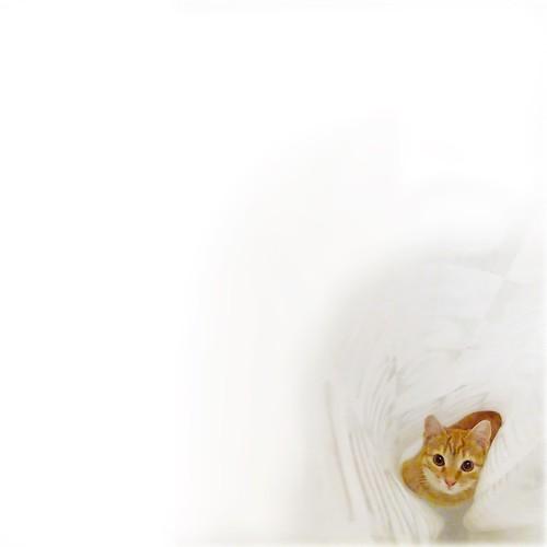 lola plots another shower curtain ambush