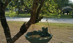 Finally hung up my fairy birdfeeder!