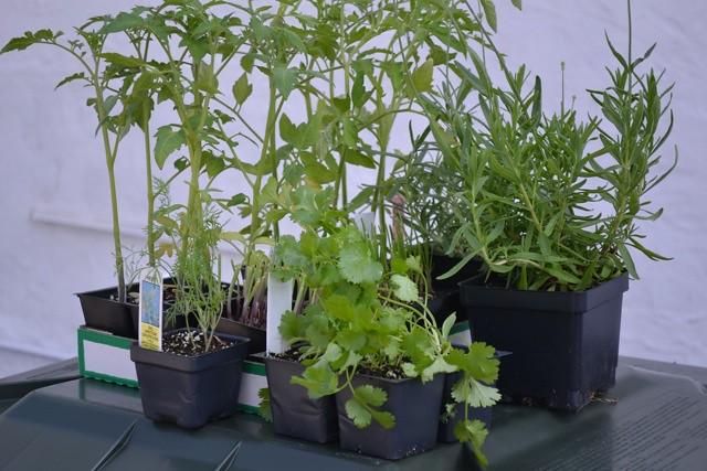 Farmer's market herbs