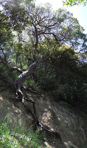Placerita Canyon Loop Pano 03
