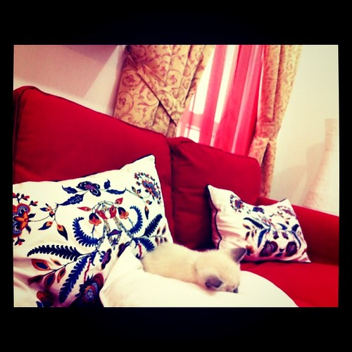 spot our sleeping cat! napping like a baby:)
