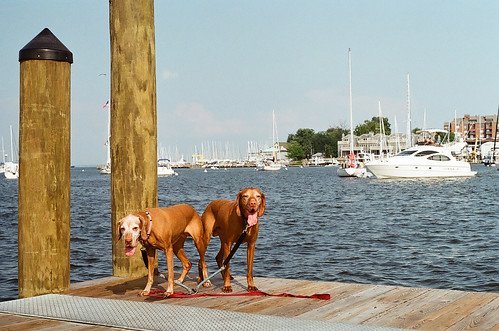 Look at us posin' doggies.