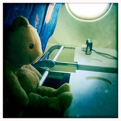 Teddy on the plane - with bandage