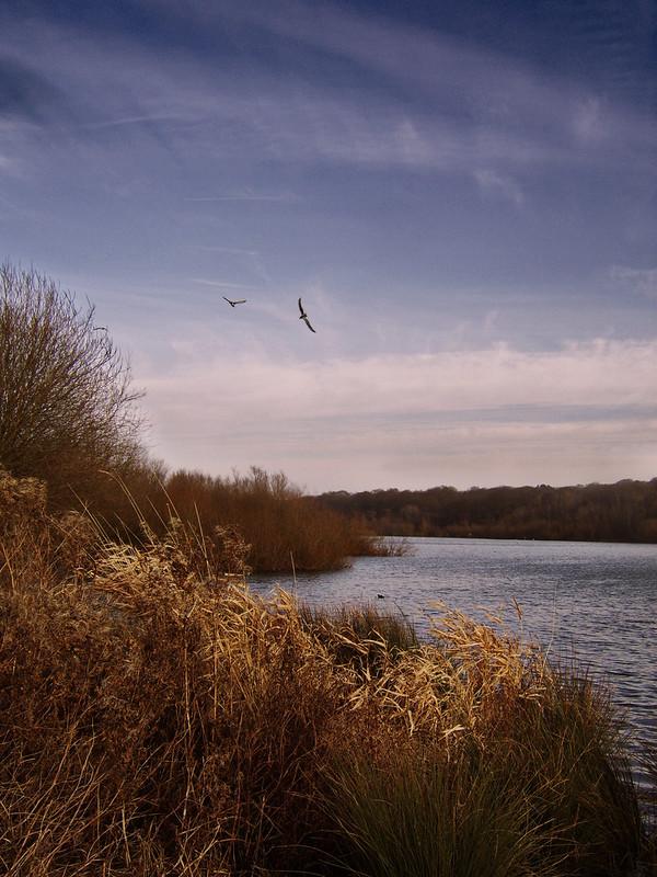 Ruslip Lido Birds