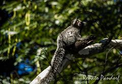 LIttle monkey - profile