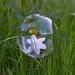 Tyngdlöst i sin bubbla