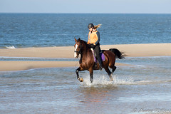 """Ameland • <a style=""""font-size:0.8em;"""" href=""""http://www.flickr.com/photos/139061502@N06/30377326776/"""" target=""""_blank"""">View on Flickr</a>"""