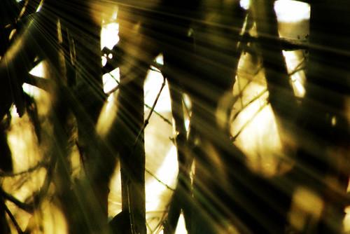 """Modified Photo:  """"Light shining through p..."""