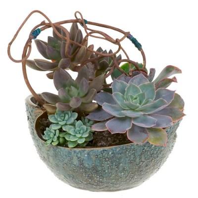 Succulents — Leanne and David Kesler, Floral Design Institute, Inc., in Portland, Ore.