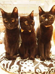 "Black cat cafe 2 • <a style=""font-size:0.8em;"" href=""http://www.flickr.com/photos/66379360@N02/10352119343/"" target=""_blank"">View on Flickr</a>"