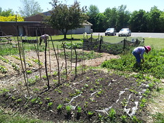 """Calvin Park Community Garden 5 • <a style=""""font-size:0.8em;"""" href=""""http://www.flickr.com/photos/61175668@N08/18722328910/"""" target=""""_blank"""">View on Flickr</a>"""