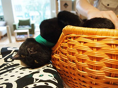 "Black cat cafe 13 • <a style=""font-size:0.8em;"" href=""http://www.flickr.com/photos/66379360@N02/10351934596/"" target=""_blank"">View on Flickr</a>"