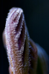 Alien Blossom