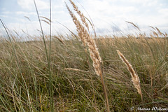 """ameland • <a style=""""font-size:0.8em;"""" href=""""http://www.flickr.com/photos/139061502@N06/29953372834/"""" target=""""_blank"""">View on Flickr</a>"""