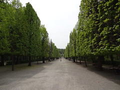 Shaved trees in the Schonbrunn gardens