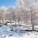 Neve no Parque Natural do Alvão-9