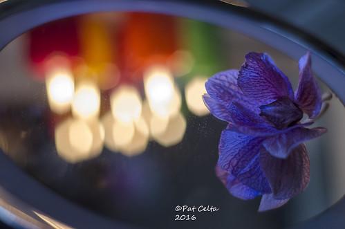 Colores - de Pat Celta