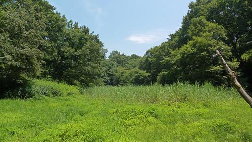 自然環境保全センター(自然観察園)(Garden, Nature Environment Preservation Center, Kanagawa, Japan)
