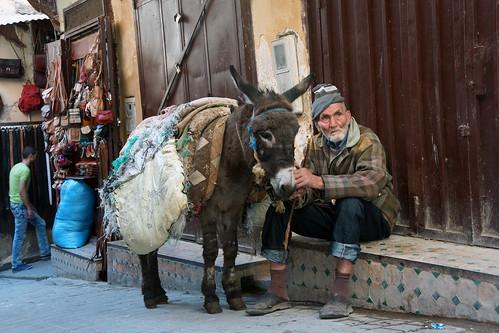 Muletier et son âne - Médina Fès