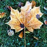 "Frosty morning. #morgon #frost #kallt #höst #morning #autumn #nahöst #landet <a style=""margin-left:10px; font-size:0.8em;"" href=""http://www.flickr.com/photos/131645797@N05/30023430193/"" target=""_blank"">@flickr</a>"