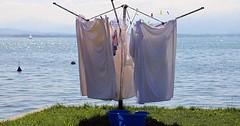 """Der Wäscheständer. Die Wäscheständer. Die Wäsche hängt zum trocknen am Wäscheständer. • <a style=""""font-size:0.8em;"""" href=""""http://www.flickr.com/photos/42554185@N00/30087926284/"""" target=""""_blank"""">View on Flickr</a>"""