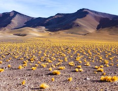 At the end of my third day from San Pedro De Atacama I finished in the flats of Los Flamencos at 14,000 feet. There was nothing but sand, the wind barrelled over the distant mountains and across the plains relentlessly. At sundown I tied my tent to a fenc