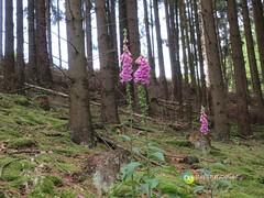 "Sauerland: Wald von Oberschledorn • <a style=""font-size:0.8em;"" href=""http://www.flickr.com/photos/84812658@N00/14609169453/"" target=""_blank"">View on Flickr</a>"