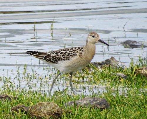 """Ruff, Stithians, 21.08.14 (J.St Ledger) • <a style=""""font-size:0.8em;"""" href=""""http://www.flickr.com/photos/30837261@N07/15133875821/"""" target=""""_blank"""">View on Flickr</a>"""