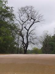 Kollibacchalu Dam -Malenadu Heavy Rain Effects Photography By Chinmaya M.Rao   (76)