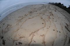 Oiled strand line Summerland 08-22-15p