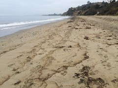 Oiled strand line Summerland 08-22-15l