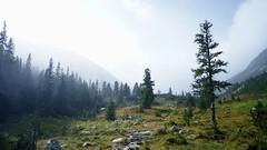 Valea Stanisoarei, iesirea din padure
