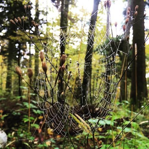 #Spinnwebe #Spiderweb  @ #Chaumont #Neuchâtel