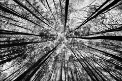 Autunno in bianco e nero