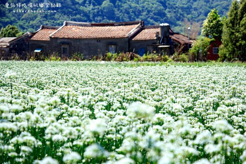 大溪韭菜花季節.韭月雪(九月雪)
