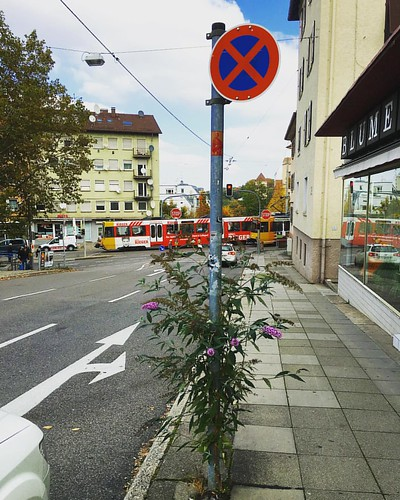 #Flieder im absoluten #Halteverbot  @ #Schwarenbergstraße #Hackerstreet #0711 #Stuttgart