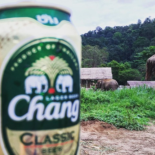 #Chang #Beer & Elephant  @ Maetaeng #Elephant #Camp #Jungle #ChangMai #Thailand  #thailoup #traveloup #changbeer