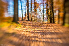 "Am Felix mit dem Lensbaby • <a style=""font-size:0.8em;"" href=""http://www.flickr.com/photos/58574596@N06/22680234340/"" target=""_blank"">View on Flickr</a>"