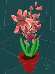 122912 Pink Hyacinth