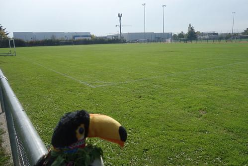 Après la rencontre, Pelico admire le grand stade des élèves, à proximité